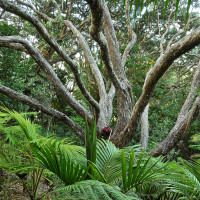 Native plants and trees at Sanctuary in the Cove