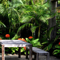 Sub-tropical gardens at Sanctuary in the Cove
