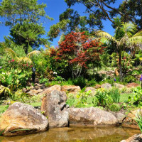 Water gardens at peaceful sanctuary in the cove